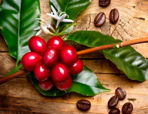 four species of coffee